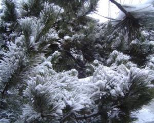 iarna21